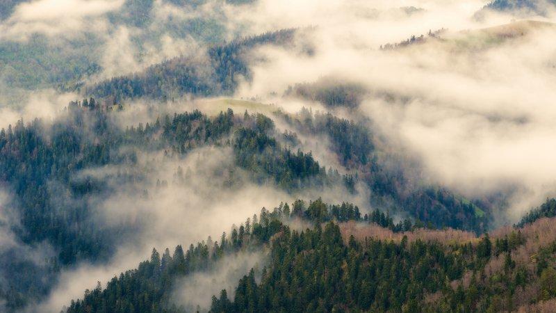 Немного о туманахphoto preview