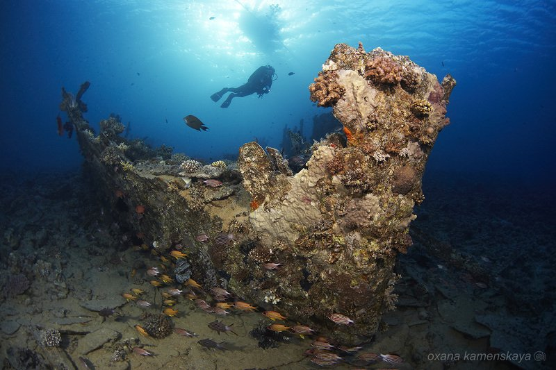 underwater blue fish coral wreck diver Баржаphoto preview