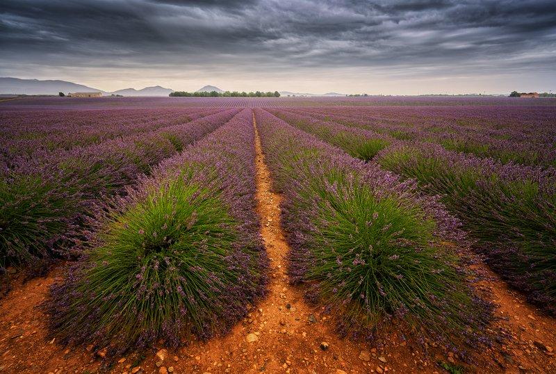laveder, valensole, dramatic sky, field, outcast, purple Lavender +photo preview