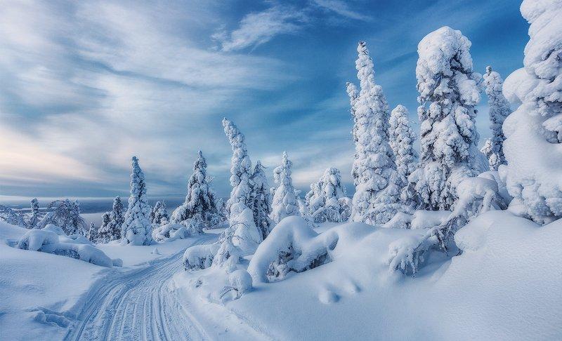 снег, горы, ели, кандалакша, заполярье, волосная, волосяная, зима, кольский полуостров. Гора Волоснаяphoto preview
