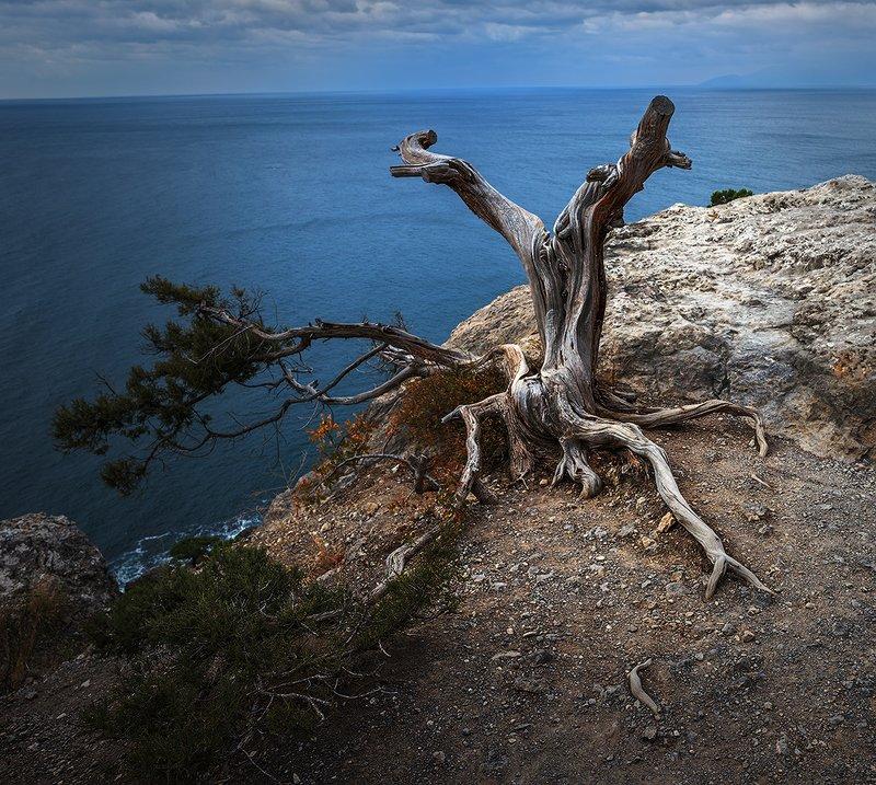 крым, новый свет, можжевельник, сухой куст, море, берег, скала Тщетное ожиданиеphoto preview