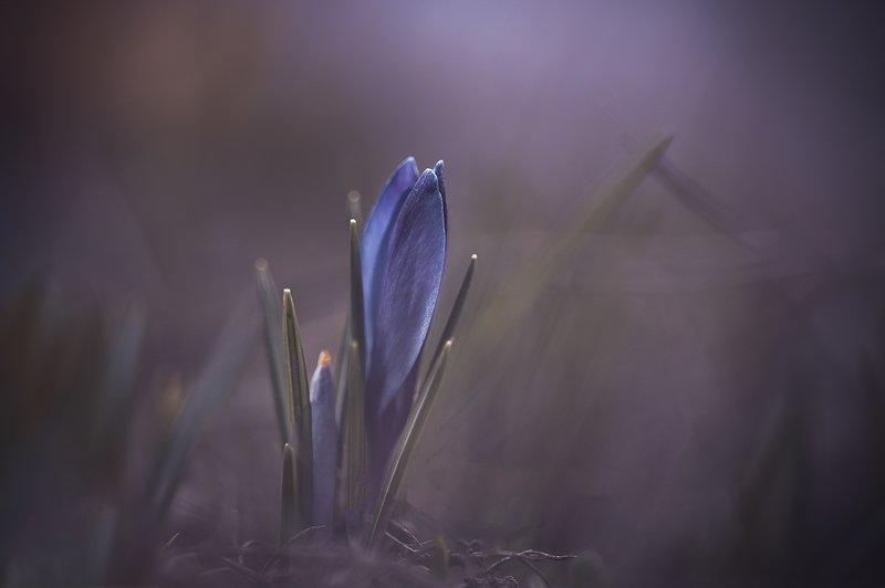 Так просыпается Весна...photo preview