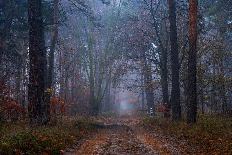 лес, осень, ноябрь, туман Стоял ноябрь на двореphoto preview