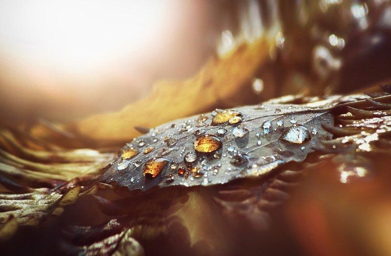 роса, капли, лист, янтарь, свет, макро, осень Янтарные каплиphoto preview