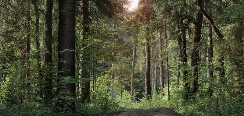 Лес во Внуковоphoto preview