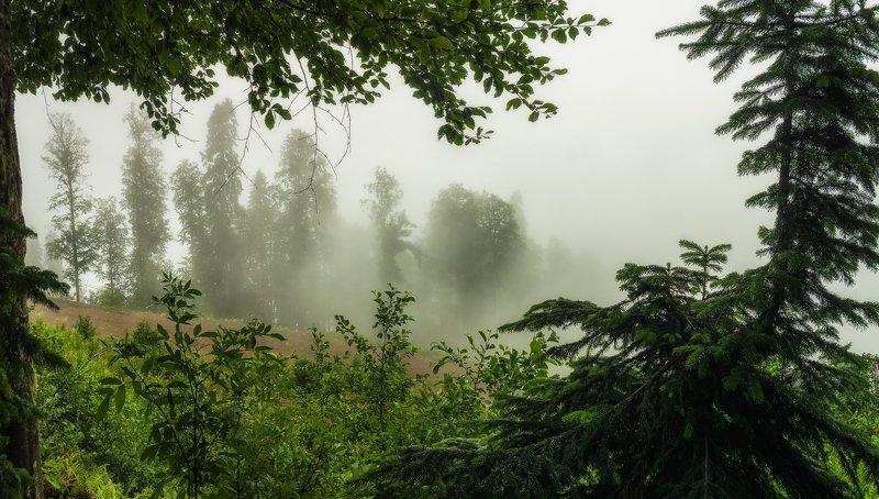 В туманах волшебного леса...photo preview