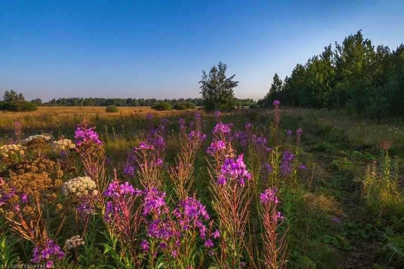 пейзаж, природа, путешествия, travel, wildlife, nature, landscape, canon, colours Время Иван-чаяphoto preview