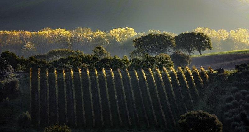 vineyardphoto preview