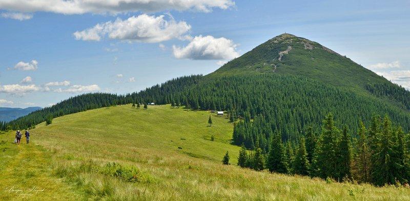 карпаты, лето, горы, хомяк, синяк, малый горган, тропа, вершина Карпаты. Восточные Горганыphoto preview