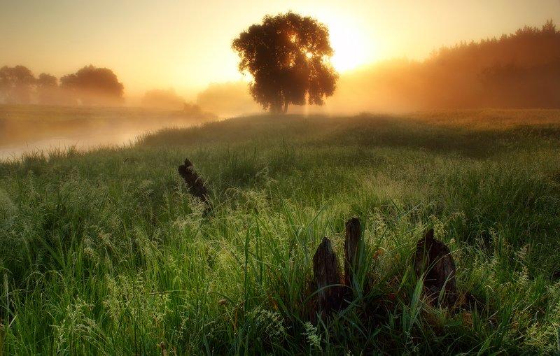 туман, солнце, утро, рассвет, река, волчья, fog, sun, morning, dawn, river Густой туман окутал берегphoto preview