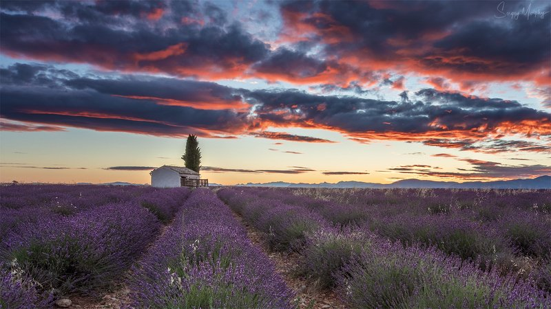lavender fields sunrise Lavender fields & sunrise.photo preview