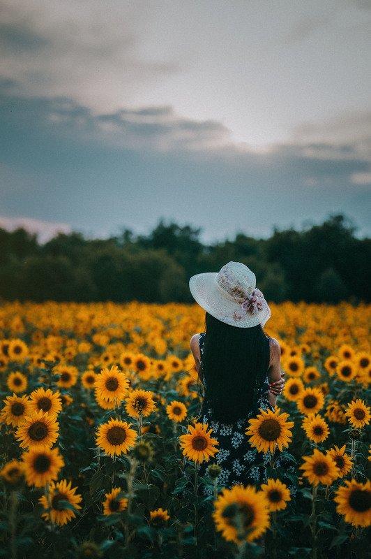 #sunflower sunwlowerphoto preview