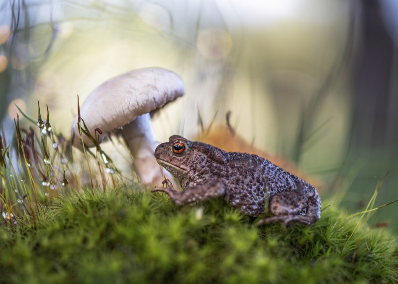макро жаба жабка гриб природа лес Жабкаphoto preview