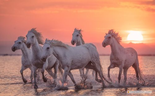 Racers of Sunrise