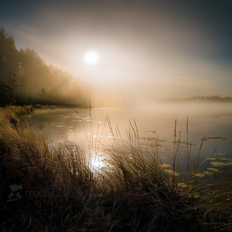 ночь, ленинградская область, осень, полнолунье, луна, сосны, озеро, туман, облака, ночью, ночь, ярко, свет, Туманное полнолуньеphoto preview