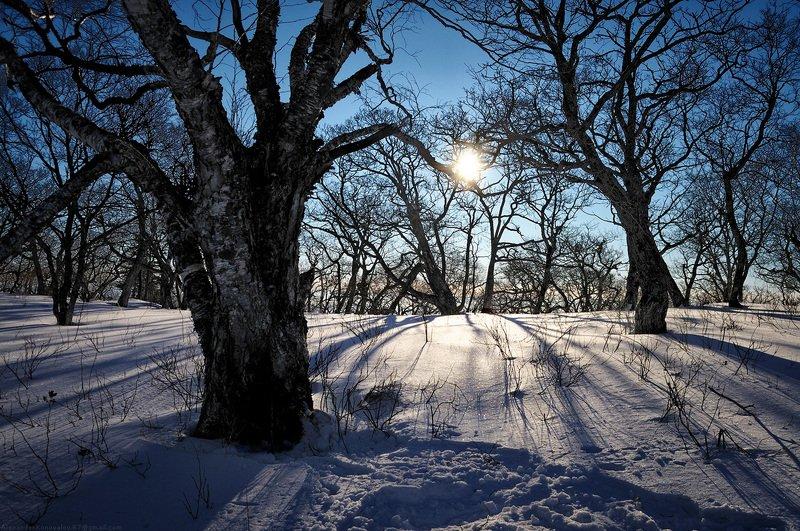 сихотэ-алинь, горы, зима, снег, лес, солнце, приморье, читинза, скалистая, гора Холодное утроphoto preview
