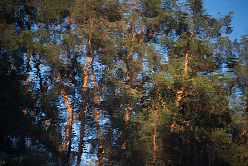 отражения, сосны, река, мещёра, рязанская область Акварели Мещёрской рекиphoto preview