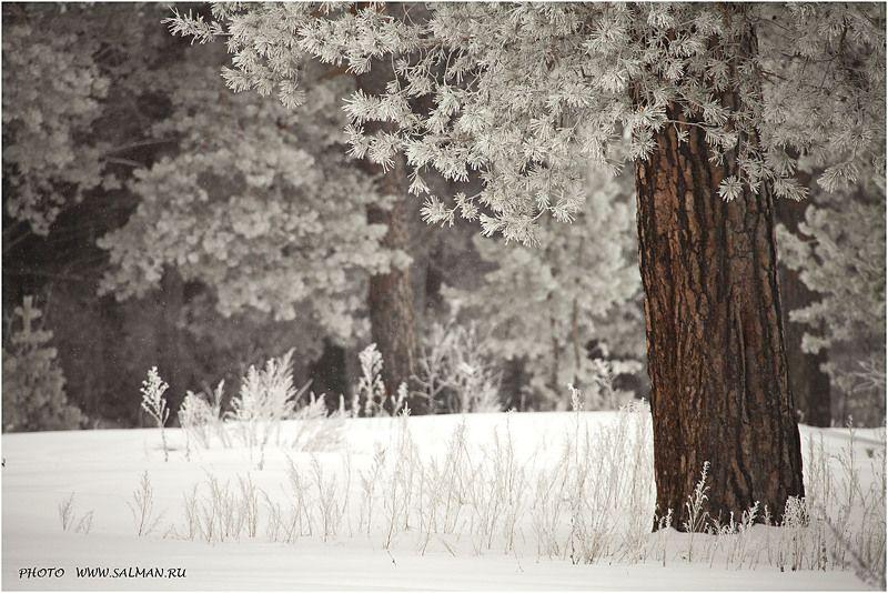 мальцево, зима, пейзаж, снег, снегопад, дерево, деревья, иней, сосны, мороз, winter, a landscape, snow, a snowfall, a tree, trees, hoarfrost, pines, a frost photo preview