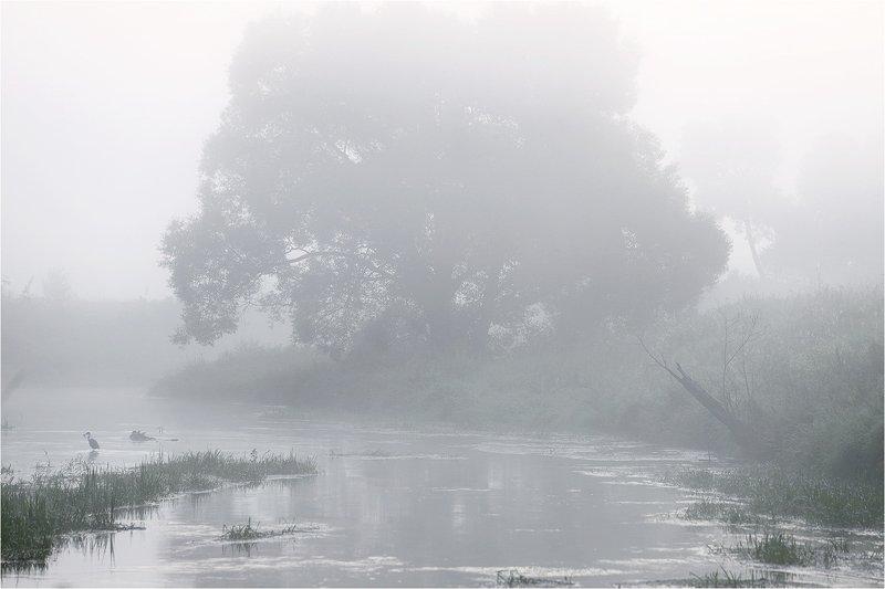 лето, июль, река, утро, туман, дерево, цапля, Река, туман и цапля.photo preview