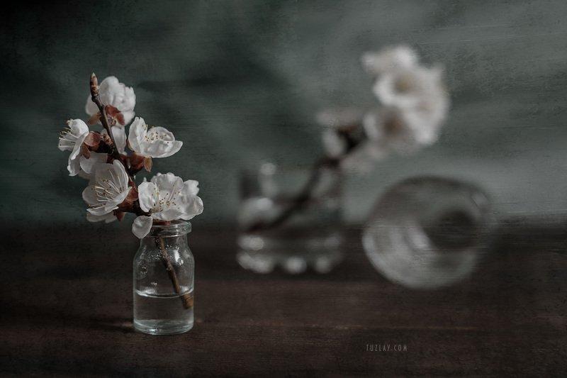 весна в стакане, весна во флаконе,белый цветки, цветки абрикоса Возвращаясь к весенней темеphoto preview
