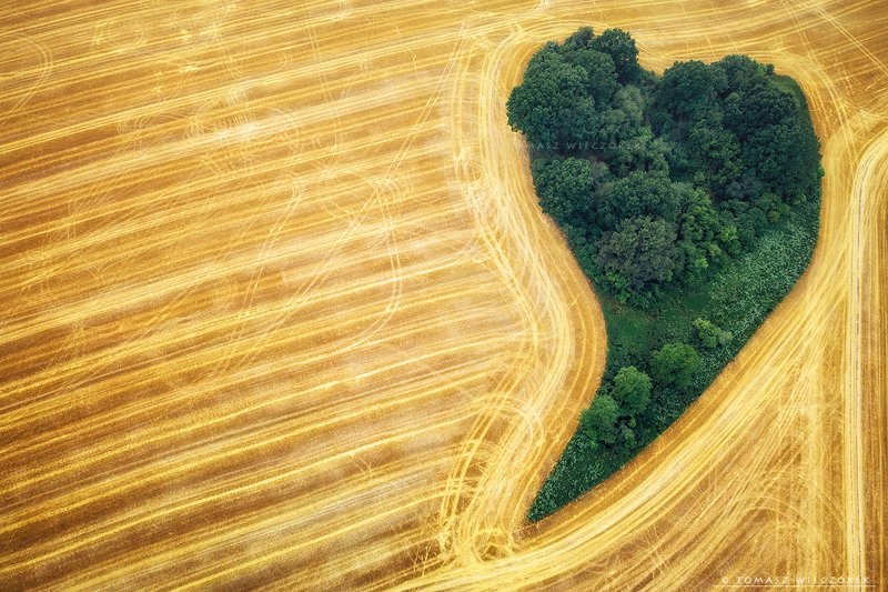 fields, drone, dji, air, poland, polish, landscape, sunrise, sunset, colours, summer, awesome, amazing, adventure, travel, beautiful, morning, heart, love Love is in the airphoto preview