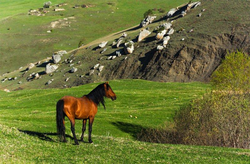 природа, пейзаж, горы, кавказ, природа россии, дикая природа, закат, свет, облака, вечер, весна, лошади, животные ***photo preview