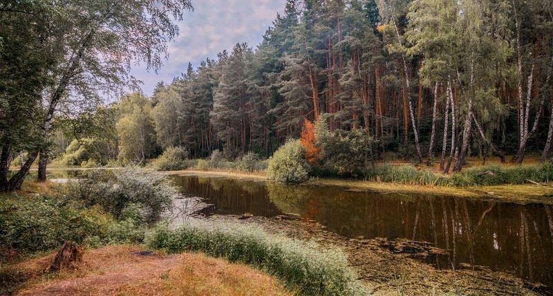 лес, озеро, природа У озераphoto preview