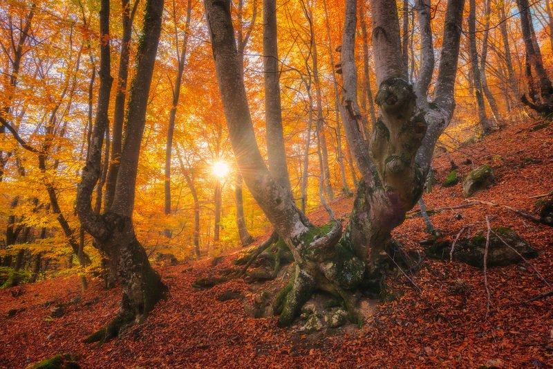 крым, осенний крым, осень, осень в крыму, фототур в крым, туры по крыму, фототур по россии, отдых в крыму,  отпуск в крыму, путешествия, туризм, природа, золотая осень, пейзаж, буковый лес, лес Яркая осеньphoto preview
