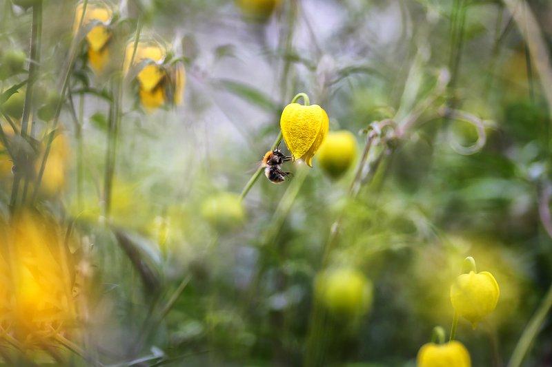 лето, сказки лета, фонарная пчелка зажигающий фонариphoto preview