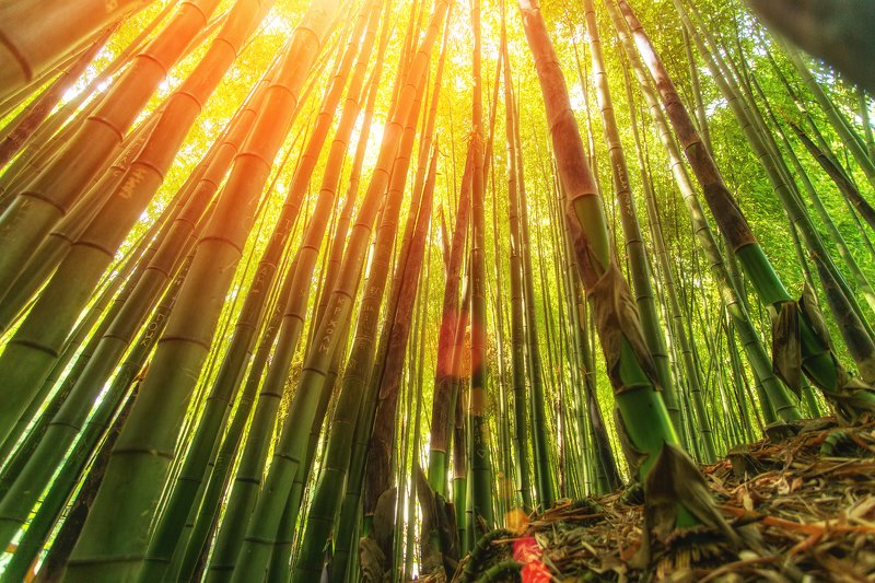 Бамбуковый лесphoto preview
