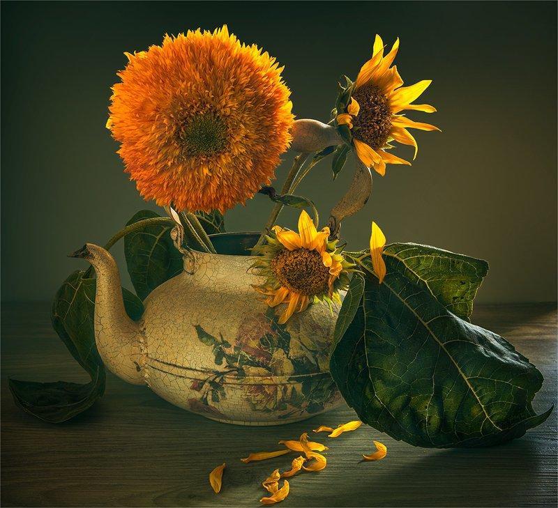still life, натюрморт,    винтаж,    цветы,  подсолнух, ретро, чайник натюрморт с подсолнухамиphoto preview