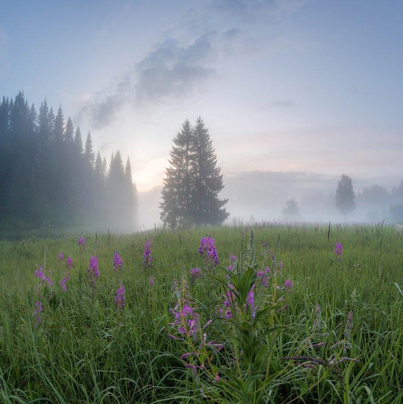 рассвет , туман ,лето, кипрей, север ,солнце, свет, вологодская Туманный вечер после грозыphoto preview