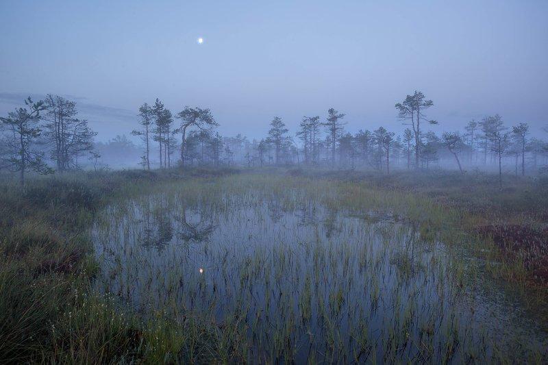 болото, кайф, рассвет ,север ,луна, свет,туман, сумерки Лунные сумерки на болотеphoto preview