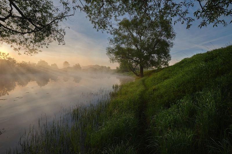 Рассвет, пруд, тропинка и деревоphoto preview