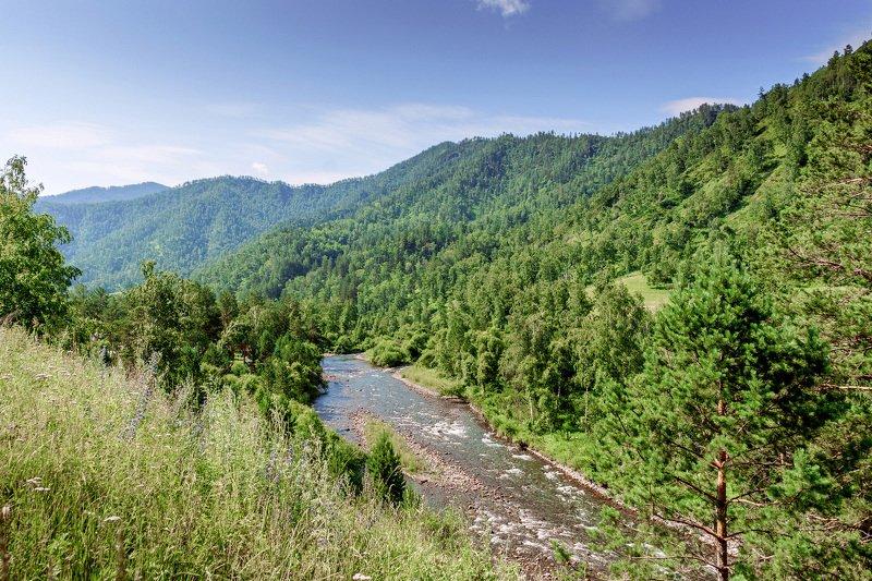 пейзаж, лето, горы, река , Горный Алтай  Верховье реки Чемал .photo preview