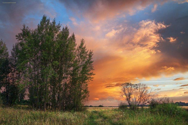 лето, закат, поле, тополь, поляна, небо Пламенеющий закатphoto preview