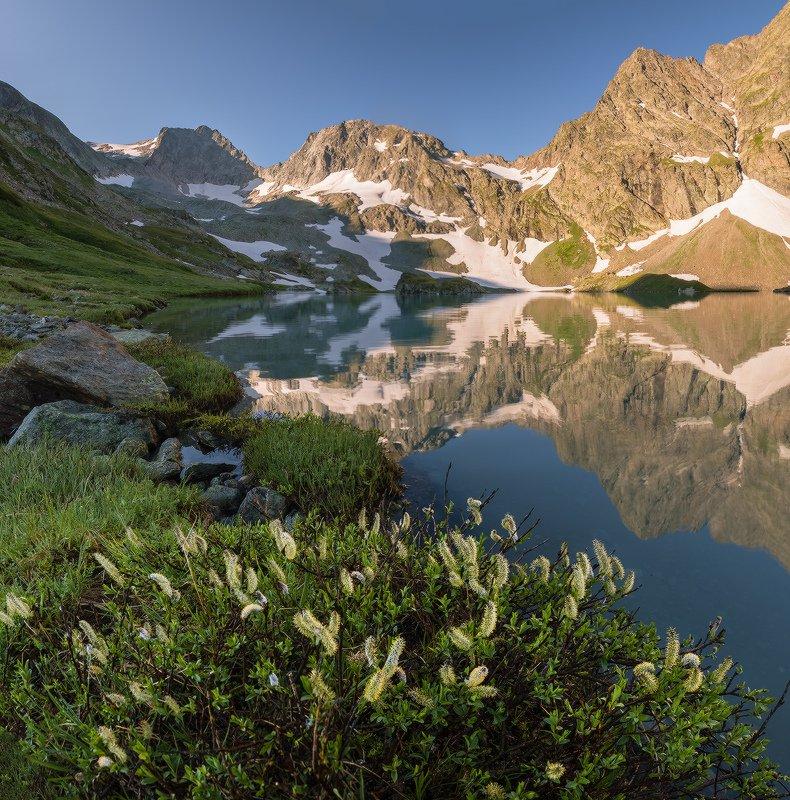 северный кавказ имеретинские озёра июль Высокогорный вербоцветphoto preview