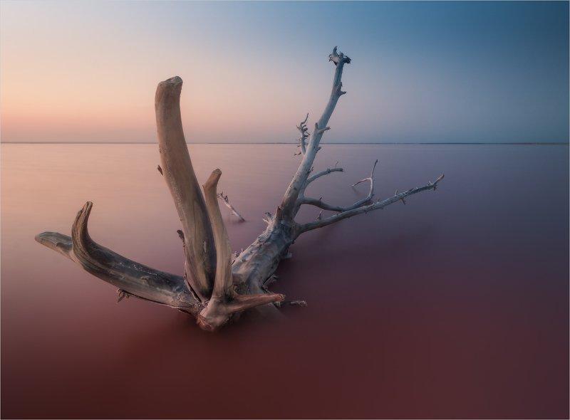 Чудище розового озераphoto preview