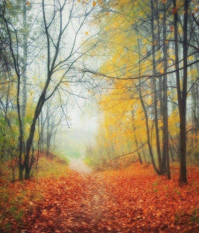 осень, подмосковье, лес photo preview
