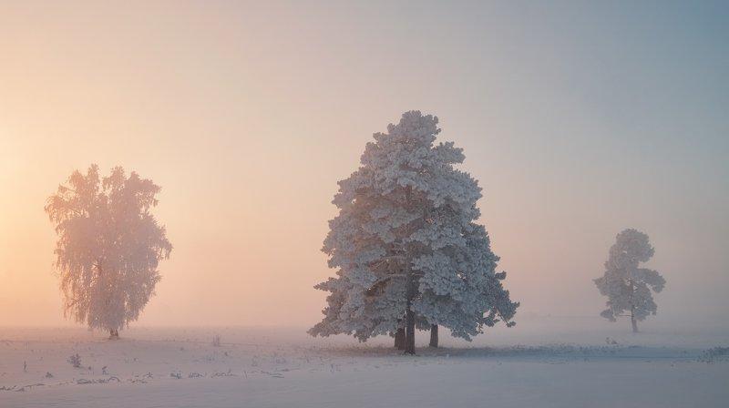 сибирь, зима, fujifilm Безмолвие...photo preview