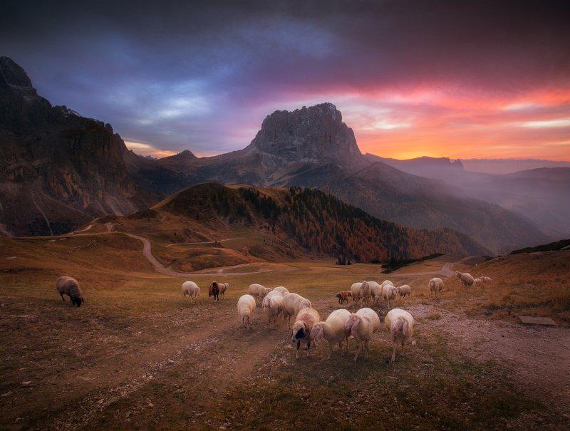 Вечер, горы, италия, закат, овцы, стадо, небо, облака Возвращение домойphoto preview