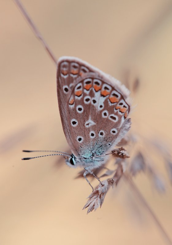 butterfly, nature }0{photo preview