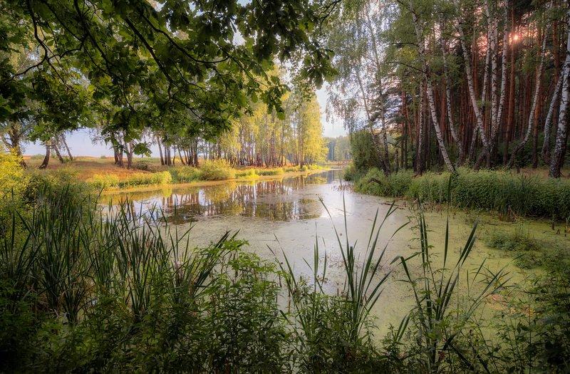 озеро, лес, солнце Озеркоphoto preview