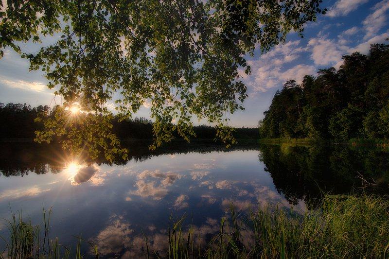 Садясь на край лесаphoto preview
