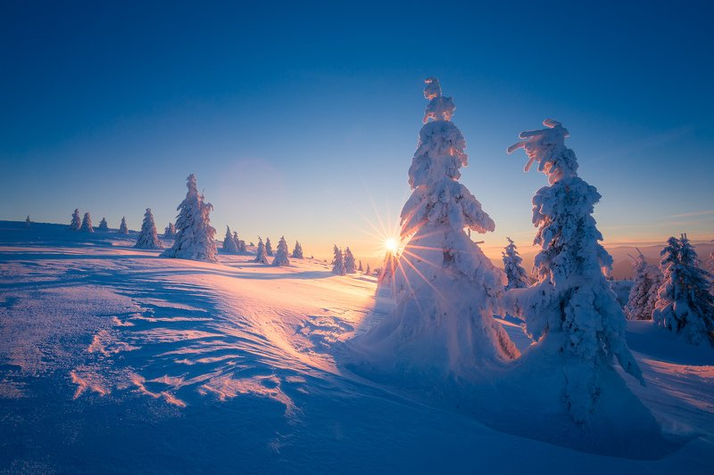 frozen, sunset, sun, sun flare, winter, trees, snow, blue, Frosty sunsetphoto preview