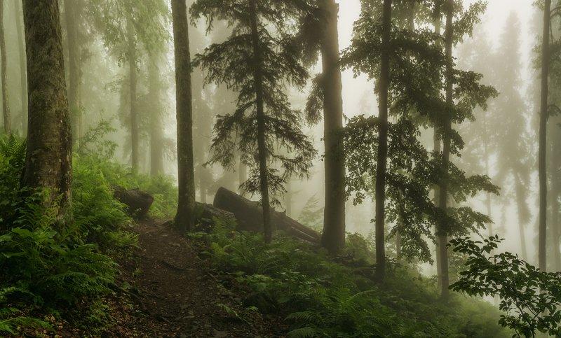 Тропою волшебного лесаphoto preview