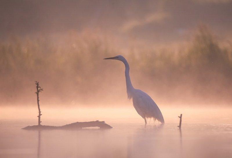 Туман.Все призрачное как во сне. фото превью