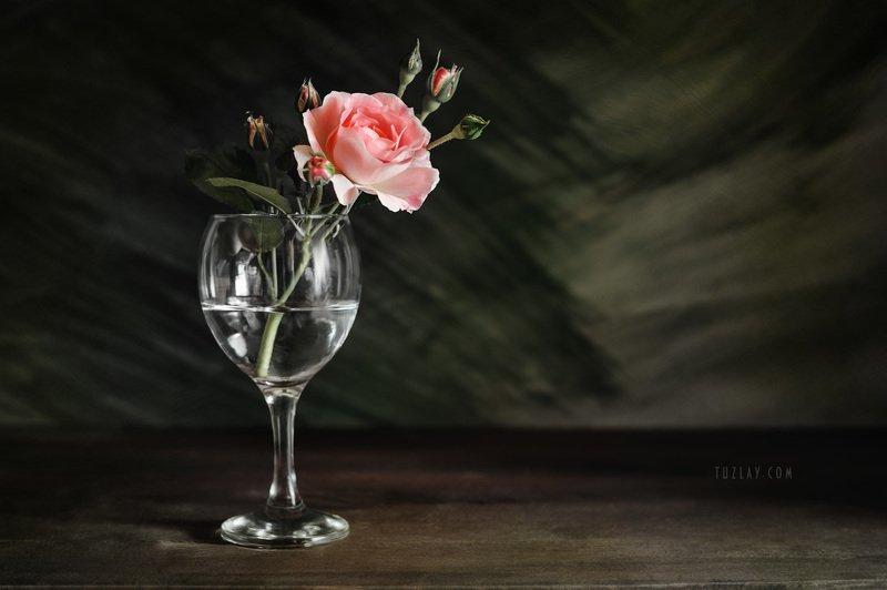 роза, розы, роза в бокале Еще про майскую розу...photo preview