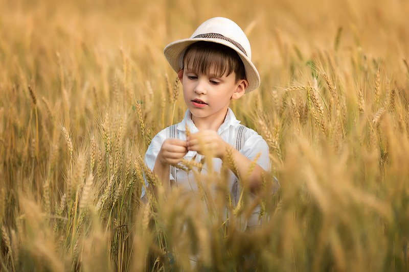 фотопрогулка, детская фотосессия, лето, июнь, дети, детская фотосессия, детский фотограф, фотосессия, радость, мальчик, малыш, счастье, детский и семейный фотограф, детское фото, дети на фото, пшеница, урожай, закат, вечер, восторг Пшеница...photo preview