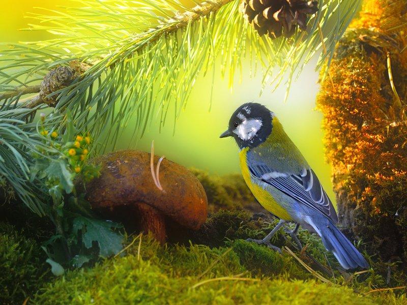 природа, фотоохота,  птицы, животные, лес, большая синица, гриб Лесные зарисовкиphoto preview